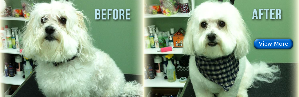 dog grooming cape cod